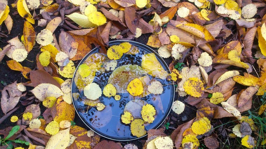 skål med löv