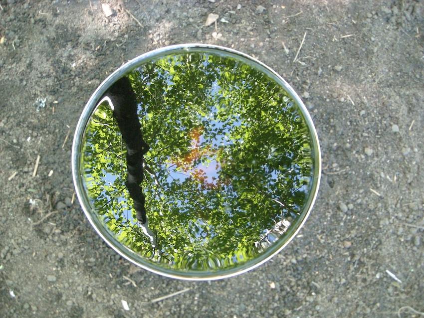 Tea, green reflexion