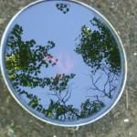 Tea, sky reflexion